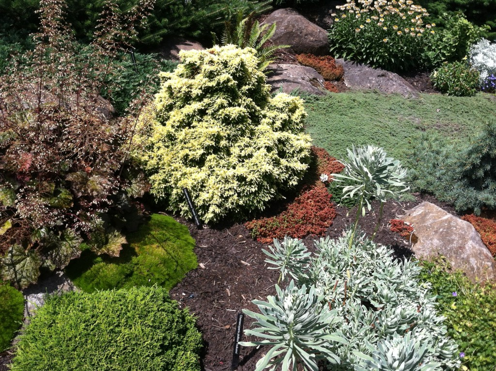 conifer garden, transplanted and still blooming, cinthia milner, jon merrill