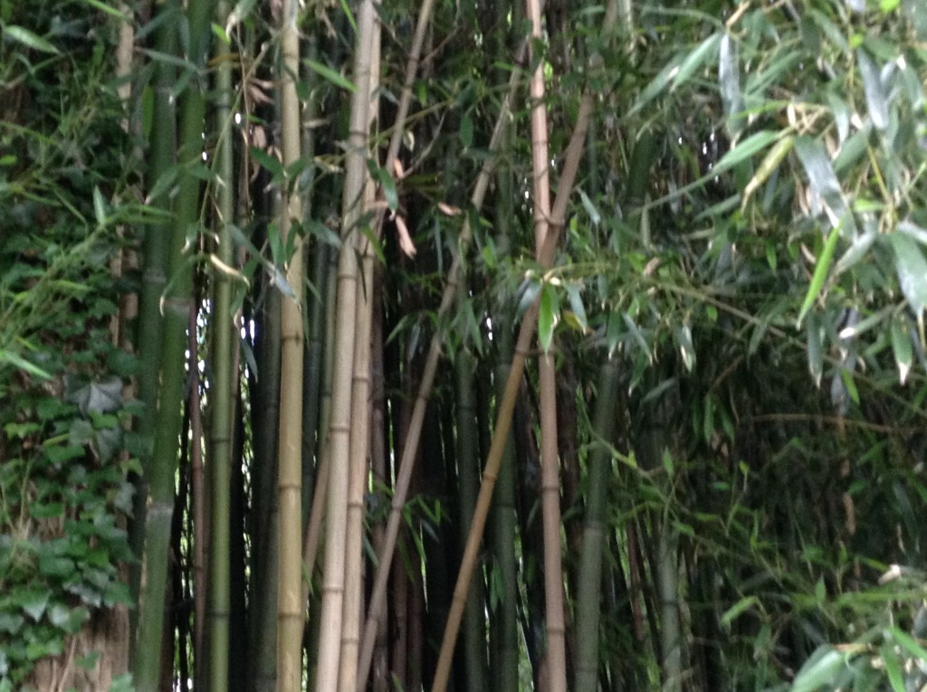Bamboo Screen, A Native Garden, Transplanted and Still Blooming