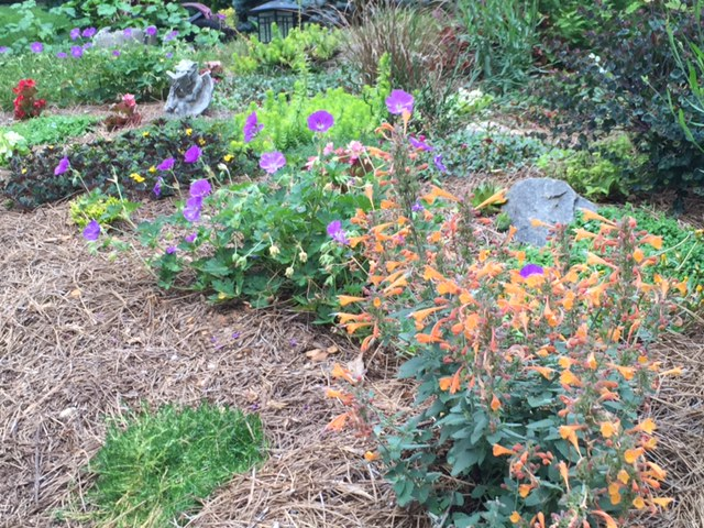 A Memory Garden, A Native Garden, Transplanted and Still Blooming