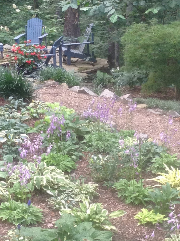 Garden chairs near a mini hosta garden, What Can I Plant on a Bank, Transplanted and Still Blooming, Cinthia Milner