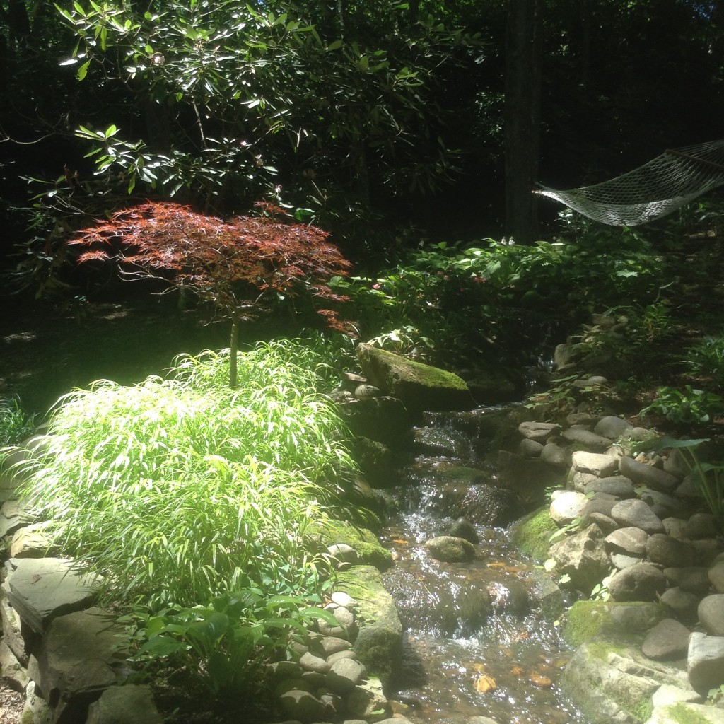 Japanese forest grass combination with Japanese maples, What Can I Plant on a Bank, Transplanted and Still Blooming, Cinthia Milner