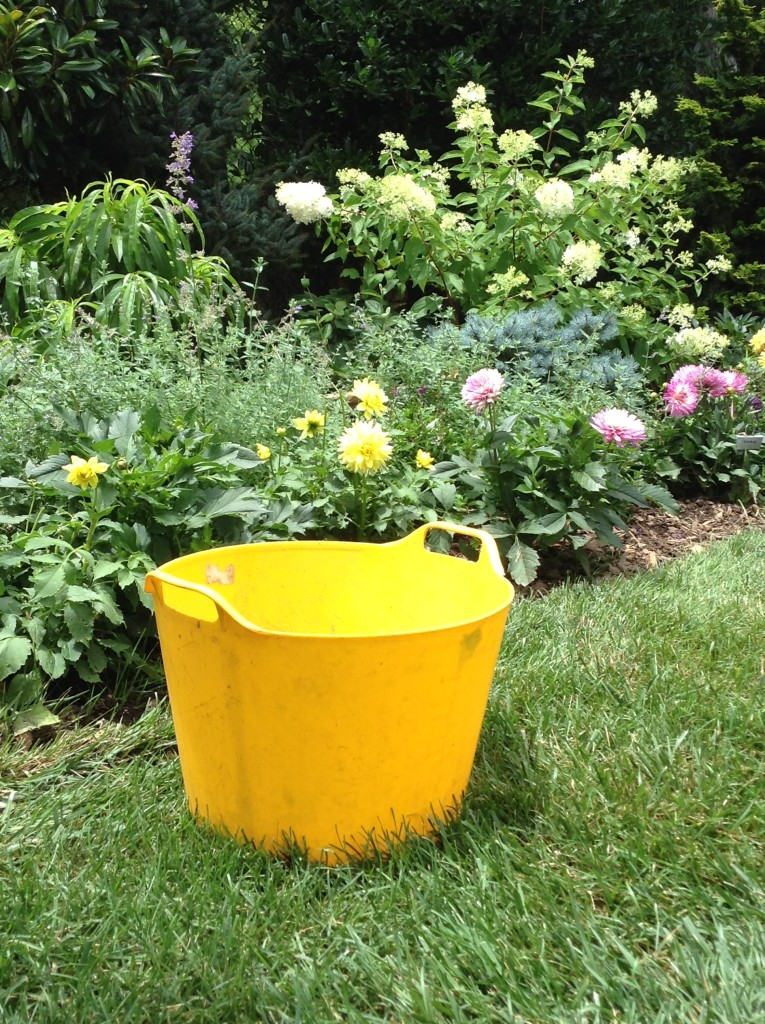 BB Barns Garden Center, Yellow Gardening tub, Transplanted and Still Blooming, Cinthia Milner
