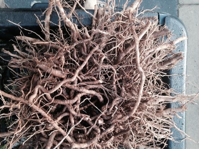 Plants Gonna Die, Transplanted and Still Blooming, Cinthia Milner