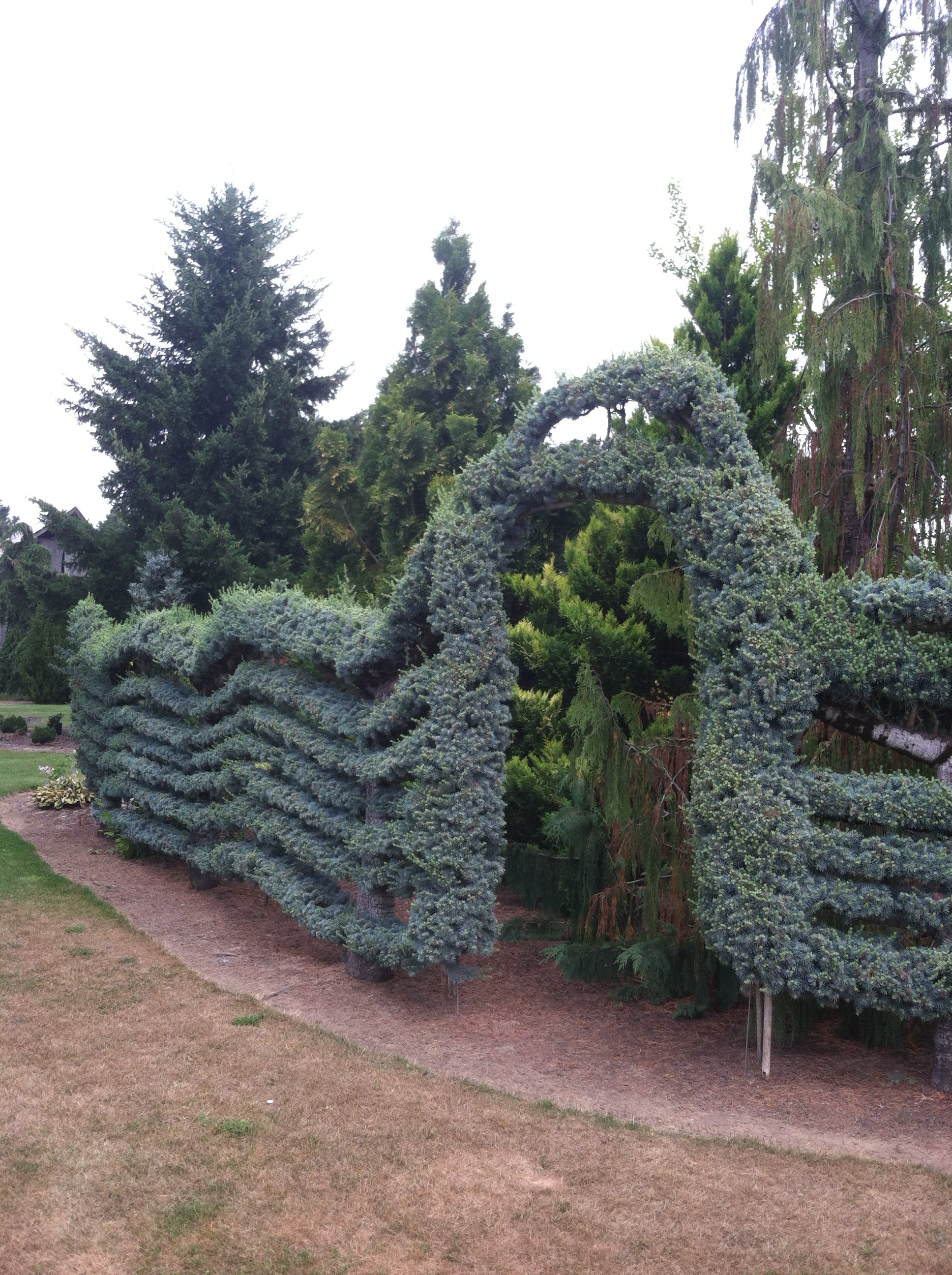 Cool Conifer Garden Pictures You Have To See These Cinthia Milner