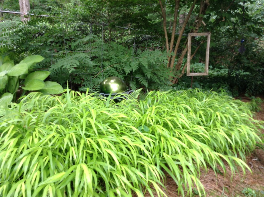Japanese Forest Grass, A Native Garden, Transplanted and Still Blooming, Cinthia Milner