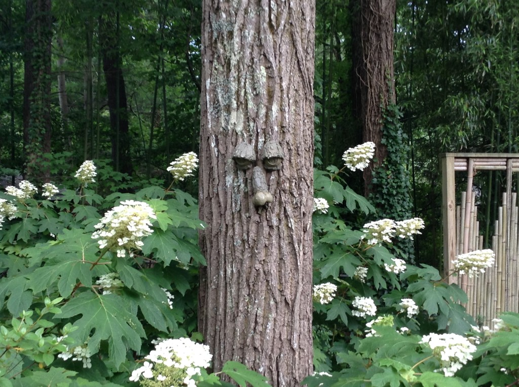 Oak leaf hydrangeas, fun face on a tree, A Native Garden, Transplanted and Still Blooming, Cinthia Milner