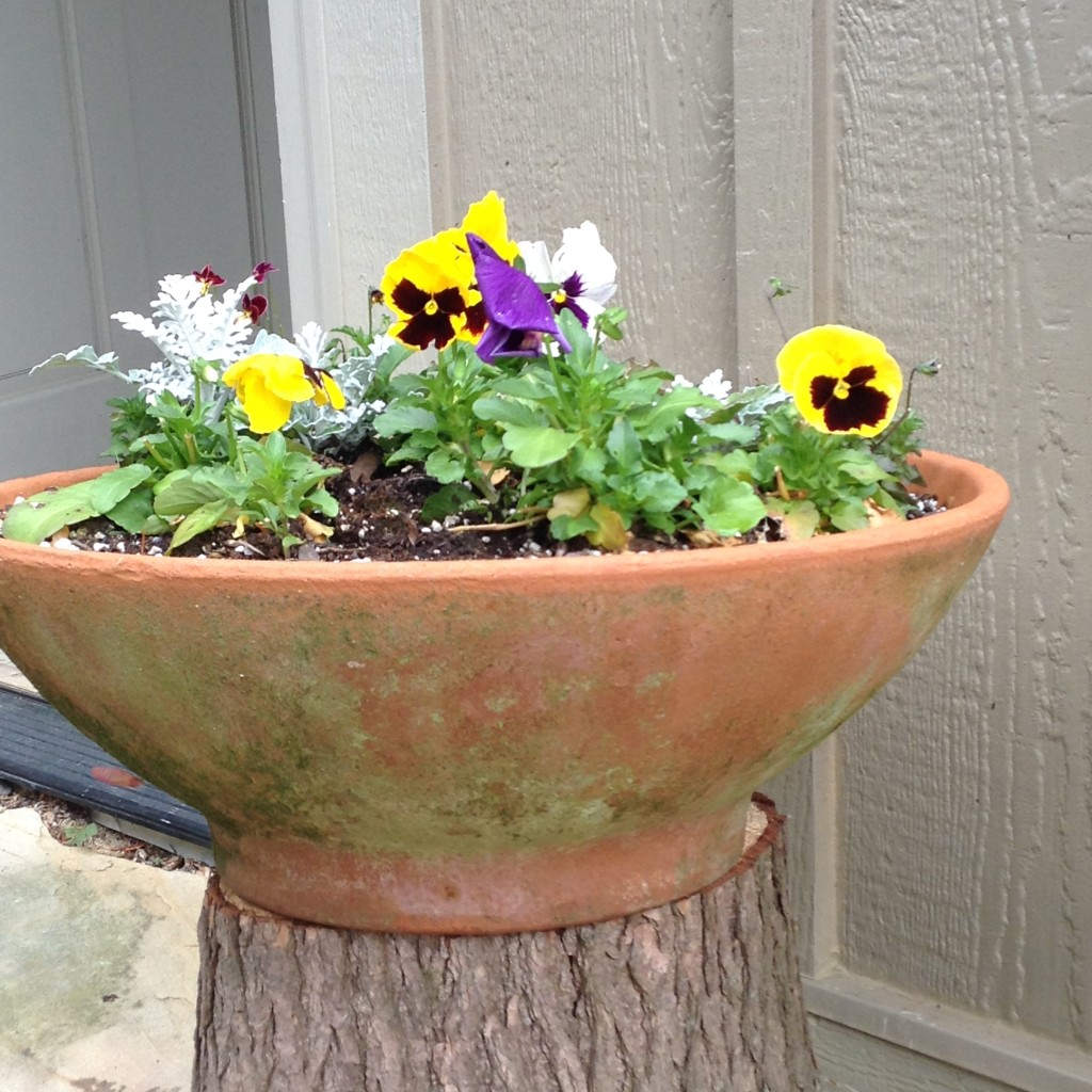 Pinterest Worthy Garden, Bowl of pansies on old log, Transplanted and Still Blooming, Cinthia Milner