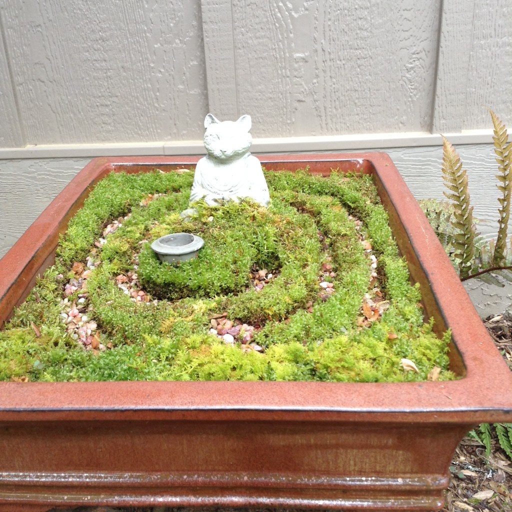 Pinterest Worthy Garden, Transplanted and Still Blooming, Cinthia Milner, Pinterst worthy labyrinth fairy garden