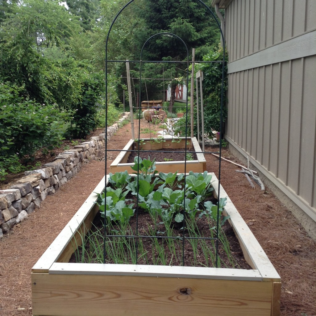 Pinterest Worthy Garden, Raised bed veggie gardens, Transplanted and Still Blooming, Cinthia Milner