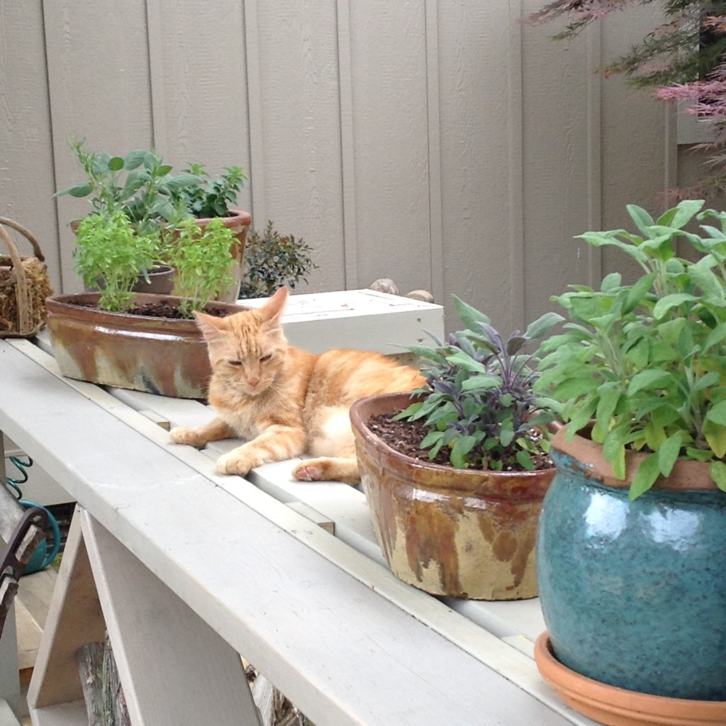 Pinterest Worthy Garden, Herb garden ideas, Transplanted and Still Blooming, Cinthia Milner