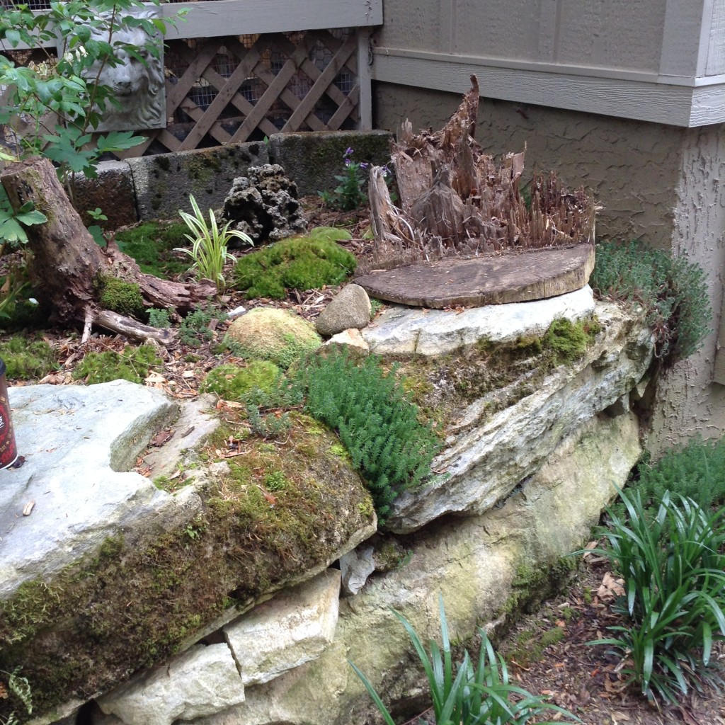 Pinterest Worthy Garden, Moss Garden, Transplanted and Still Blooming, Cinthia Milner,