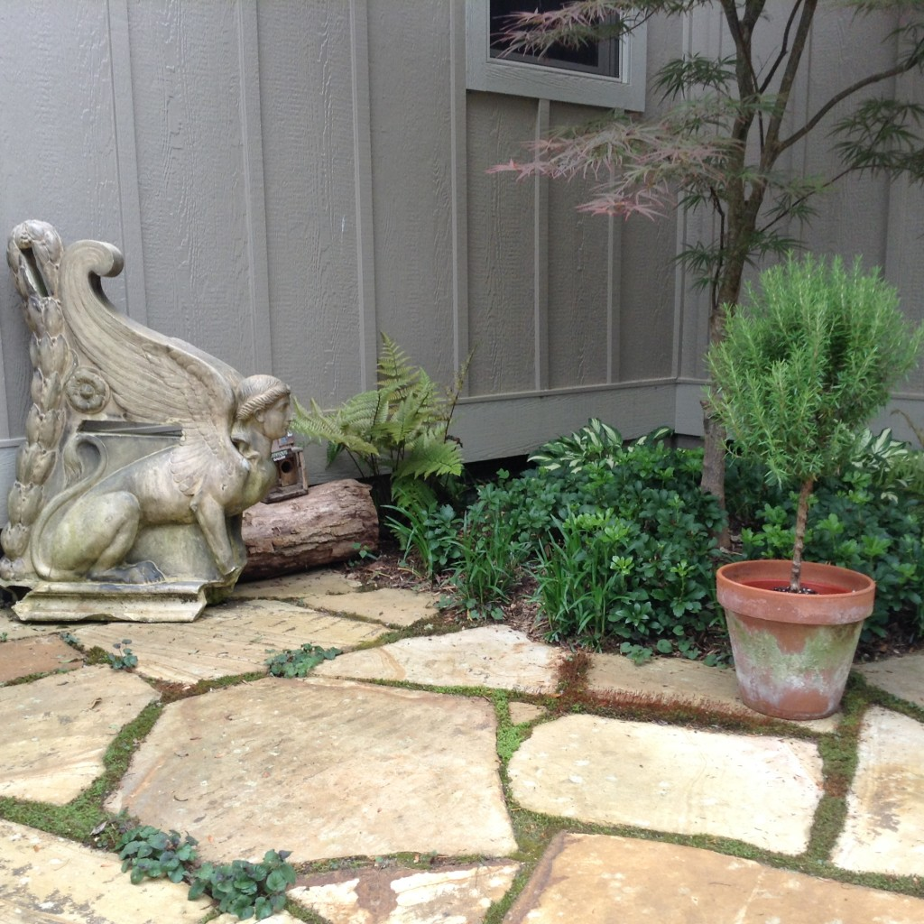 Pinterest Worthy Garden, antiques and herbs, Transplanted and Still Blooming, Cinthia Milner