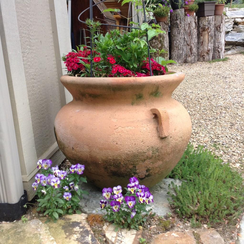 Pinterest Worthy Garden, Transplanted and Still Blooming, Cinthia Milner