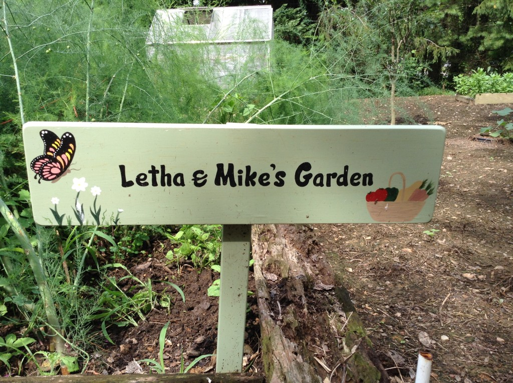BB Barns Garden Center, Garden Tour, Transplanted and Still Blooming, Cinthia Milner